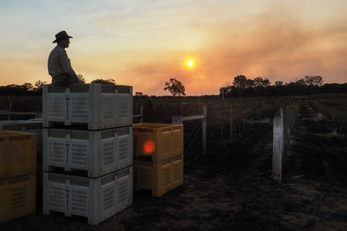 Bushfire recovery for boutique new South Wales vineyard