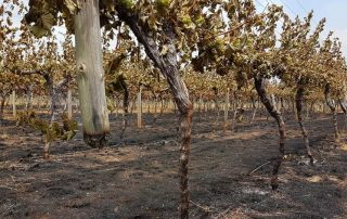 toppers mountain wines New England NSW recovering after tingha plateau fire