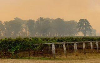 New England NSW wine region bush fires topper's mountain wines