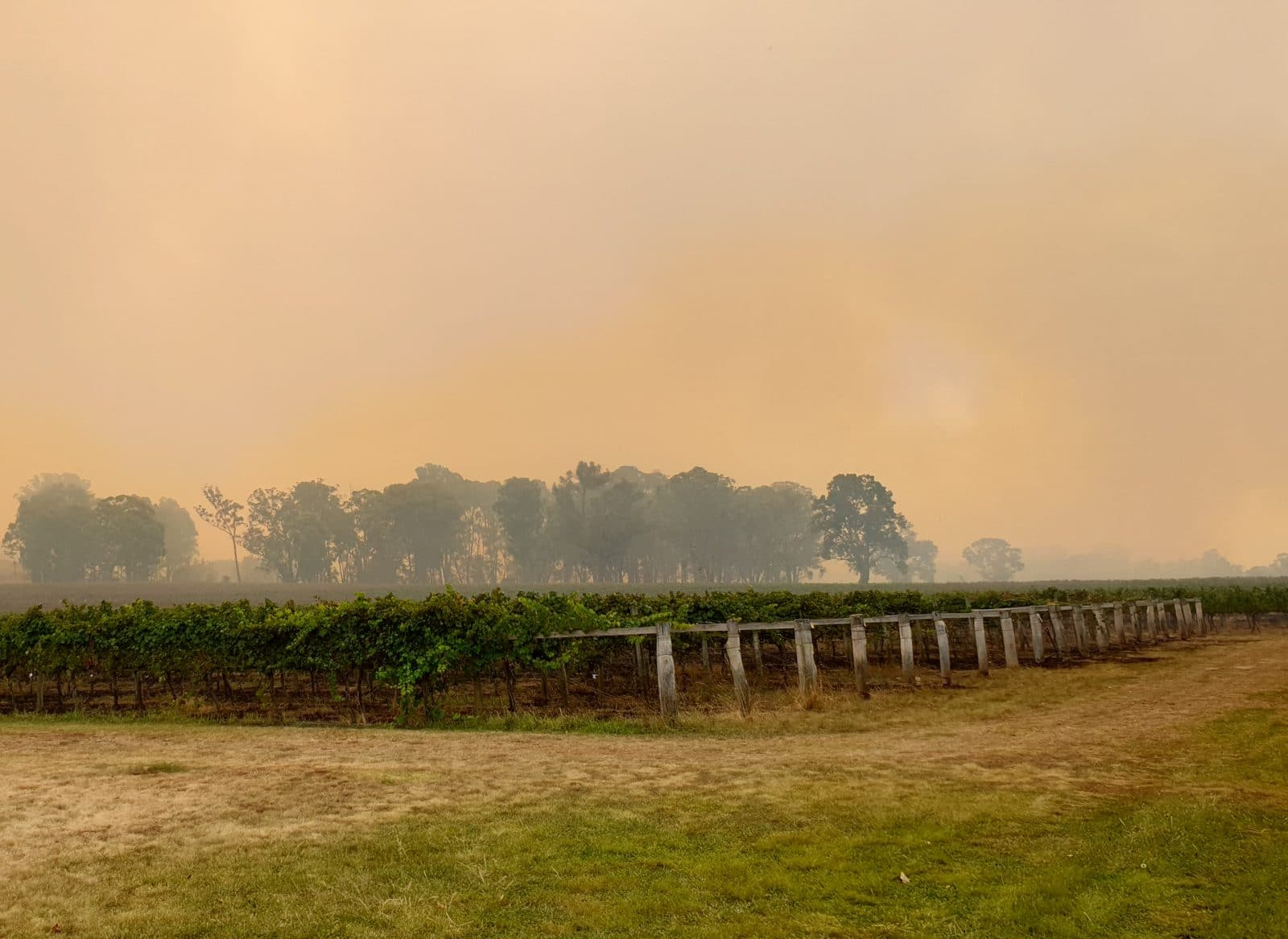 New England NSW wine region bush fires topper's mountain wines